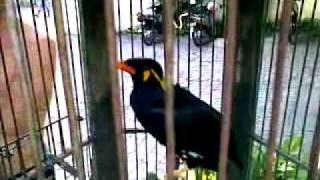 R2D2 BIRD