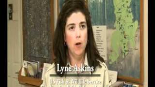 nrcs longleaf pine initiative south carolina
