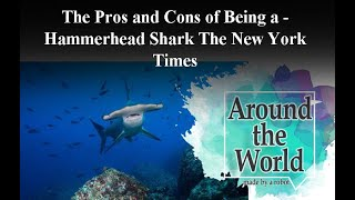 The Pros and Cons of Being a Hammerhead Shark - The New York Times