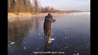 Первый раз на зимней рыбалке и сразу такое... Новичкам везёт :).