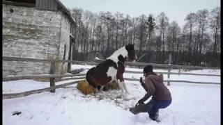 "Видяшечка №4 ""Гиппократ""))"