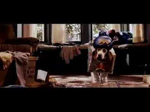 Trailer do filme Meu Querido Vira-lata