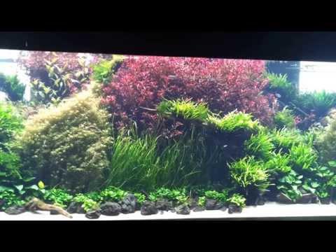 Forests Underwater by Takashi Amano at the Lisbon Oceanarium