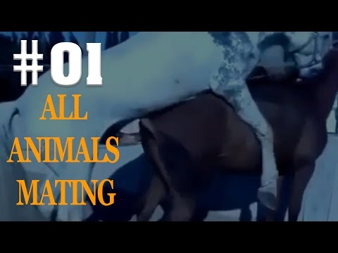 All Mating 0f Animals In The Wild [Video Length Compilation Season 1]