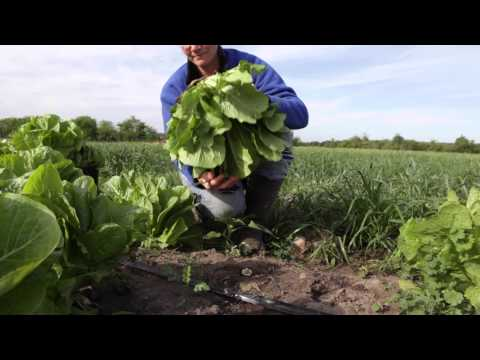 World Hunger Relief: Our Approach to Alleviating Hunger