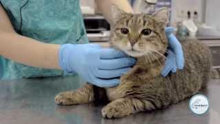 Как дать таблетку коту / кошке