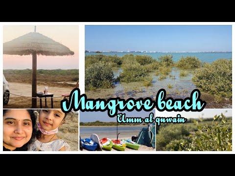 Mangrove Beach Umm Al Quwain Beach Camping Spot In UAE Kayaking| Umalquwain Mangroves|UAQ BEACH Vlog