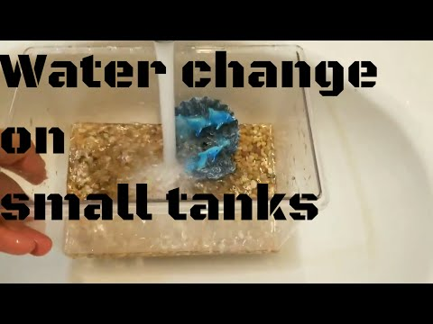 HOW TO CLEAN A 2 GALLON OR SMALLER FISH TANK 2017