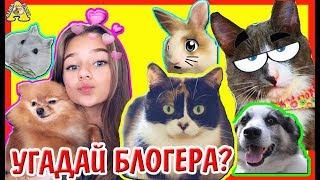 УГАДАЙ ВИДЕОБЛОГЕРА! / Slivkishow / Magic pets / Катя Адушкина / Хомки / Анука Давай-ка / Alisa Easy
