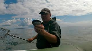 Копаем ракушку Ракушка есть Сахалин Сахалинская рыбалка Sakhalin Fishing