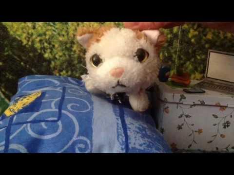 The Cat Collection: Влог Виньки :3