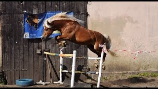 Loose jumping ~ Wolne skoki Stajnia Brody 28.06