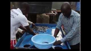 Dipo The Fish Farmer Part 1