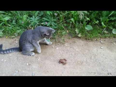 Кошка нашла лягушку и играет с ней.