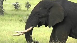Tembo lunch @ Serengeti with www.safaricrewtanzania.com