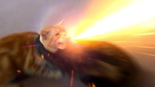 じゃれあう我が家の猫Part1 適当に効果音と字幕を付けた動画です。