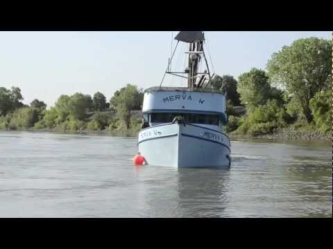 California Department of Fish and Game Video on Merva W barging salmon.mp4