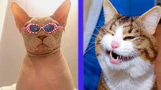 BEST CAT MEMES COMPILATION OF 2021 PART 38 (FUNNY CATS)