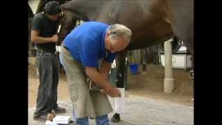 Shoeing the Racehorse with Ray Amato