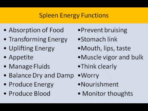 Chinese Medicine: The Spleen