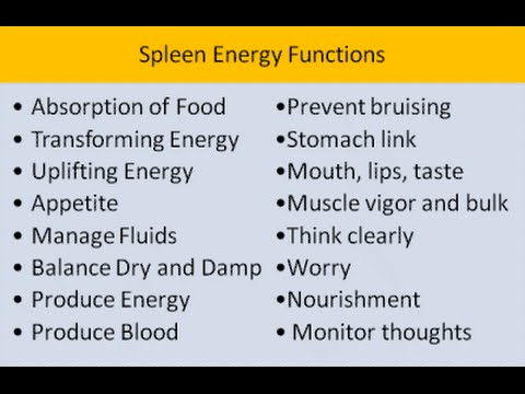 chinese medicine: the spleen - youtube, Human Body