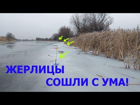 К ВЕЧЕРУ ЖЕРЛИЦЫ