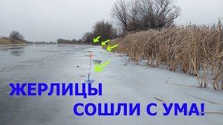 К ВЕЧЕРУ ЖЕРЛИЦЫ СОШЛИ С УМА!