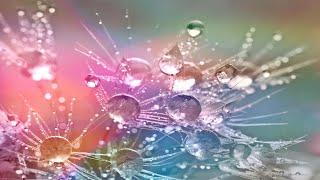 Sons de la Nature. Pluie Douce pour Dormir - Calme Bien-Être et Relaxation🎵 Rain Sounds for Sleep