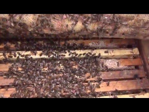Зимний осмотр пчел