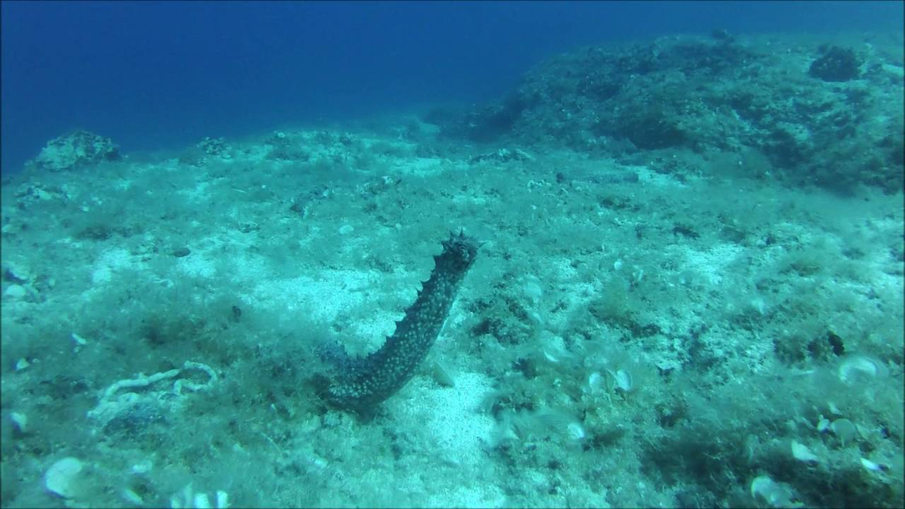 sea cucumber research paper Archives of high school student research papers on salmon populations and fisheries in  research paper archives  sea cucumber ecosystem based management.