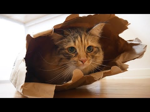 Magical paper bag to capture cute cats