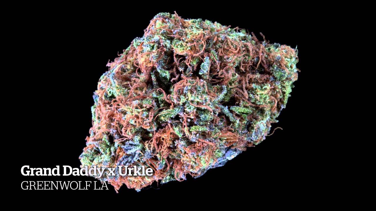 2014 HIGH TIMES SF Medical Cannabis Cup Indica Entries