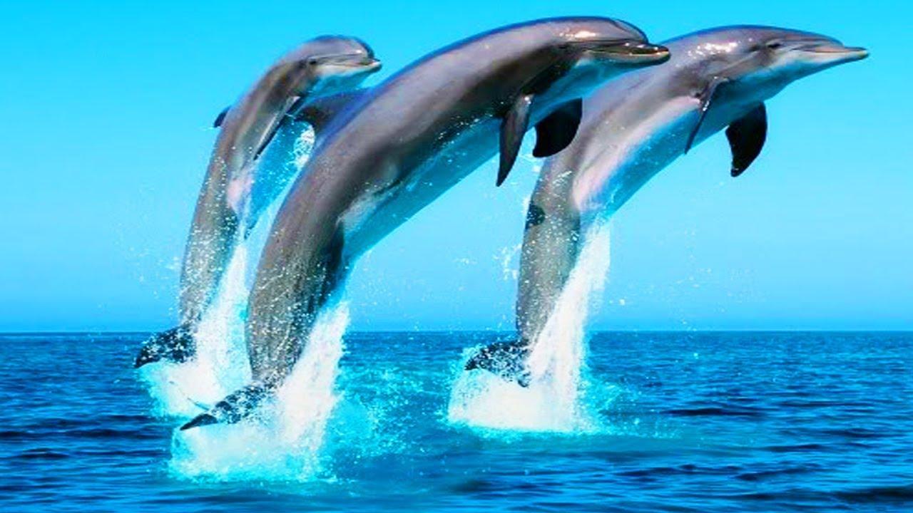 Какие виды дельфинов обитают в черном море? Дельфины в ...