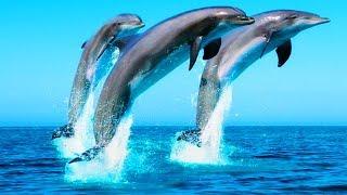 #Блог #Чёрноеморе #Дельфины в море на пляже играем с песком #AlisebabyTV(Это видео