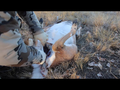 Download HOW TO PROPERLY GUT A DEER ( FIELD DRESSING 101)