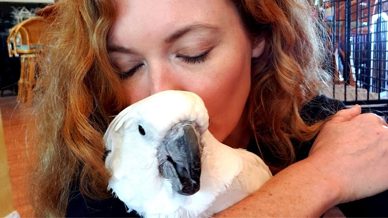 Parrot Left to Die Finally has a Name