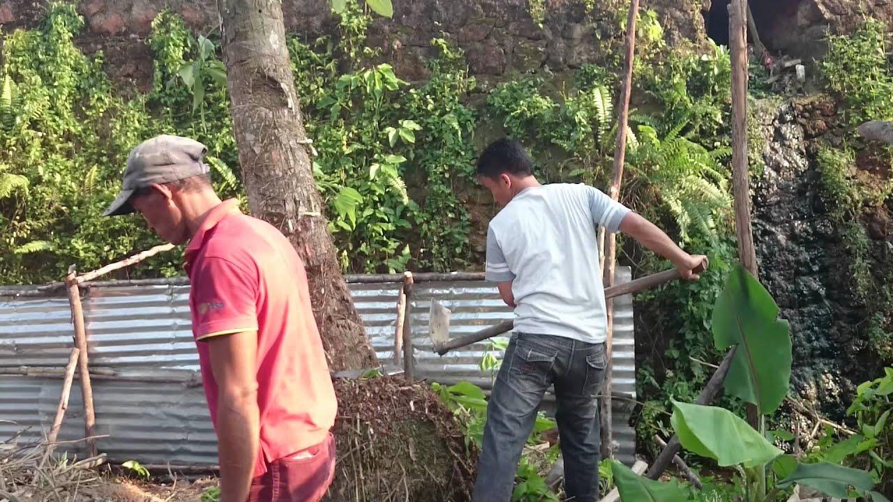 Alex Bersih Pohon Kelapa Youtube