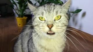 Зверское нападение кошки на человека