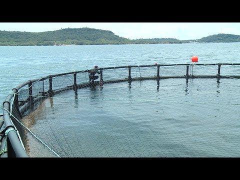 Nuôi hải sản trên biển - Hướng đi quan trọng cho ngành Thủy sản