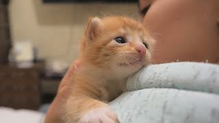 Four Little Warriors Opening Their Eyes | Newborn Kittens Raised By Human