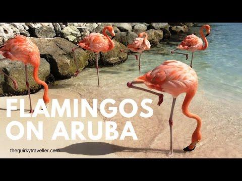 Flamingos on Renaissance Hotel Private Beach #Aruba #Caribbean #onehappyisland