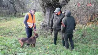 Bobowa24.pl - Hubertus Koła Łowieckiego Bażant w Bobowej