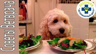 Накормили Собаку в Праздники со Стола? Расстройство Желудка? Что Делать?