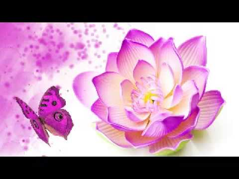 Lotus the national flower of india youtube lotus the national flower of india mightylinksfo