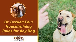 Dr. Becker: Four Housetraining Rules for Any Dog