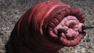 7 STRANGEST Monster Mysteries