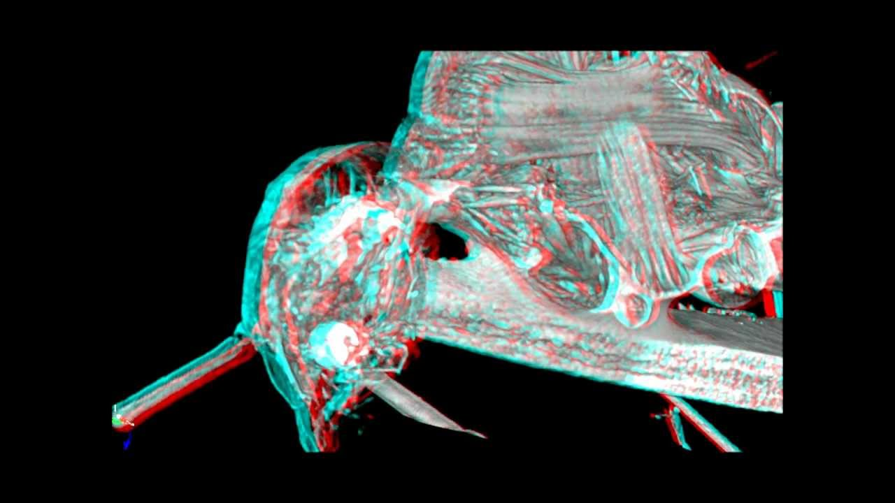 3D- Micro-CT study of the anatomy of an ant (Cataglyphis rosenhaueri ...
