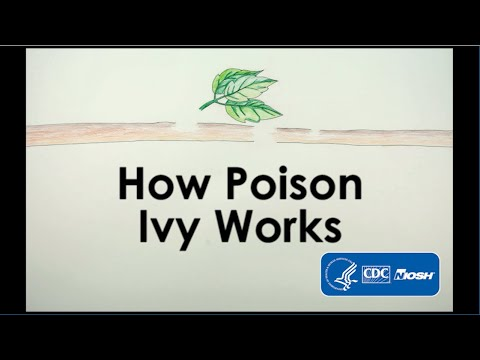 How Poison Ivy Works