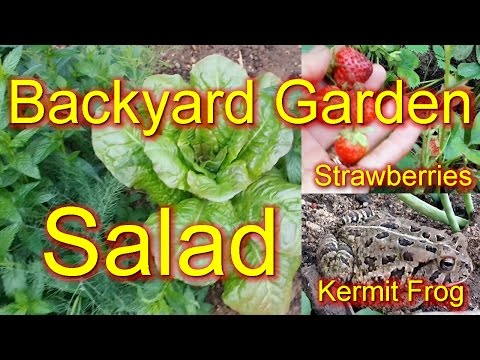 Garden Salad - Everything but Kermit the Frog !!!