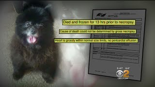 2 On Your Side: Pet Owners Blame Rover App For Deaths